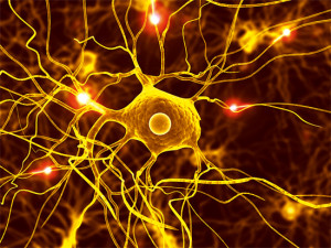 Intercellular communication is achieved with a quadrillion electrical pulses per second.